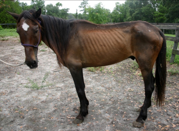 Report Abuse & Neglect - Horse Protection Association of Florida