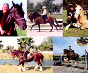 Morgan Silver Montage Horse Rescue