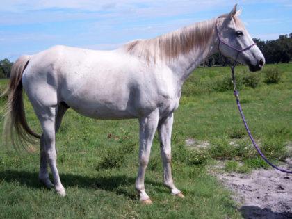 silver-horse-protecion-1