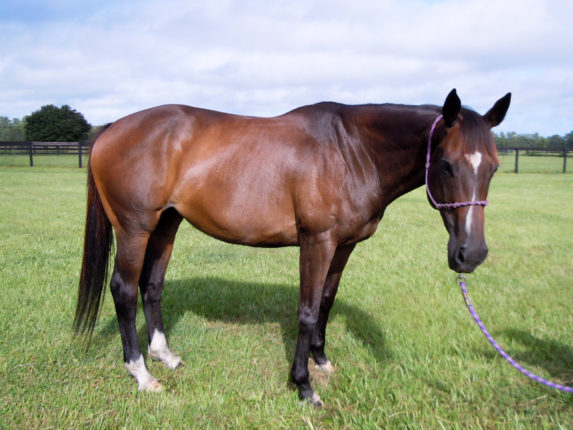 heart-horse-protection-rescue-3