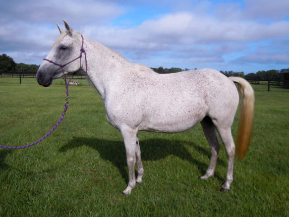 hope-horse-protection-rescue-1a