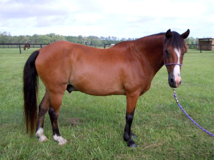pookie-horse-protection-rescue-2