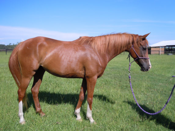 ruby-horse-protection-rescue-11