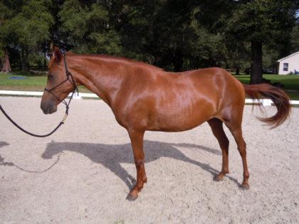 velvet-horse-protection