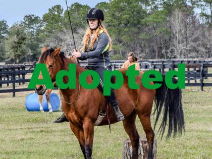 bongo-horse-rescue-1