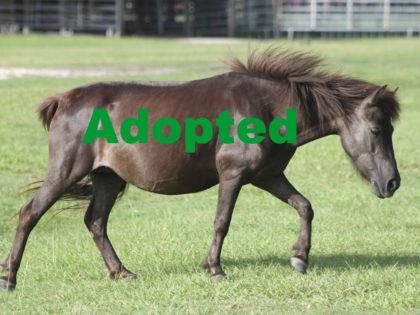 33-hannah-adopted